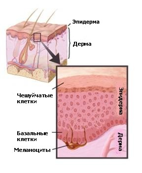 https://www.zdrav.kz/images/content/cancer/pic8.jpg