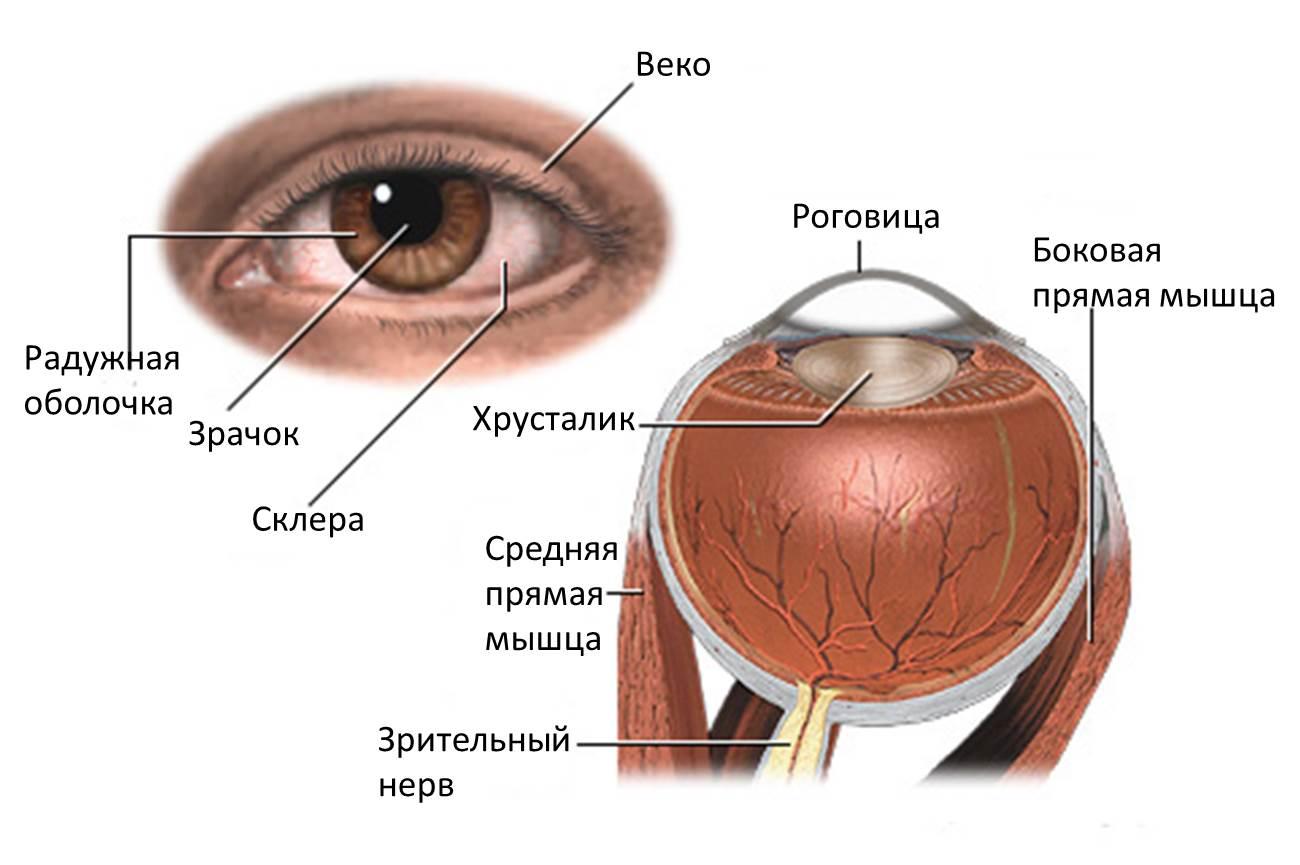Заболевание ногтей фото и описание