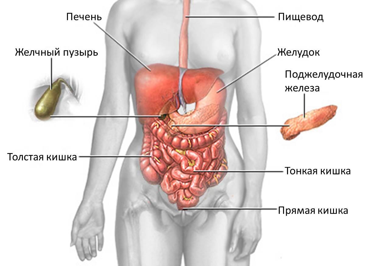 паразит толстого кишечника человека