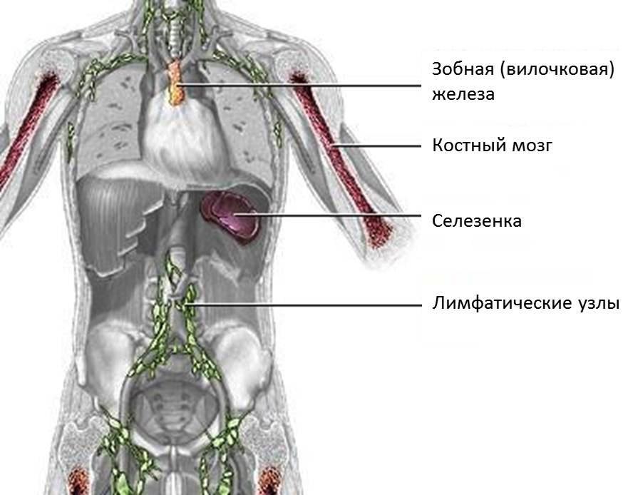 Рак кости