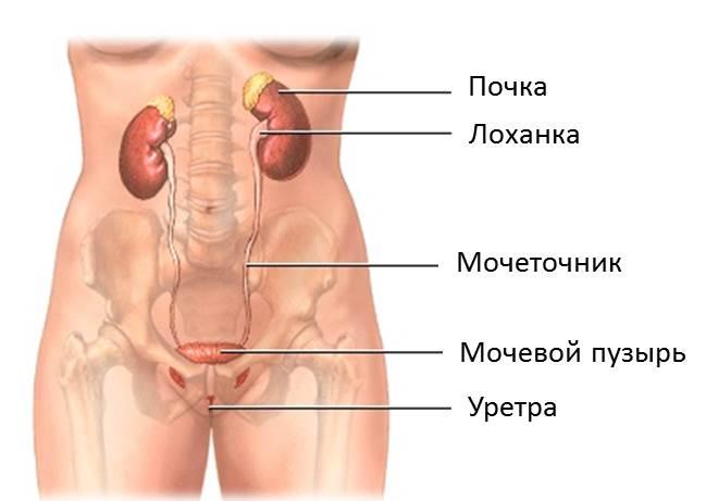 воспаление уретры у женщин фото