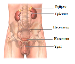 Хламидиоз и жгучая сперма