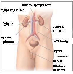 Мочеиспускание сперма