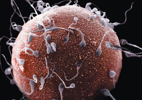 Фото как выглятдит сперма фото 650-663