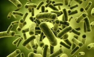 Наши Микробы и Симбиоз с Природой: О Роли Пробиотиков в Поддержании Здоровья