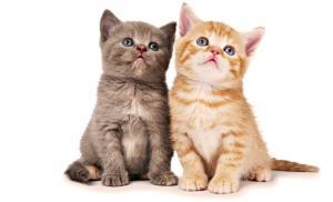 Кошки могут помочь человечеству победить СПИД