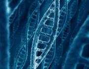 Ученые обнаружили в ДНК «биологические часы человека»